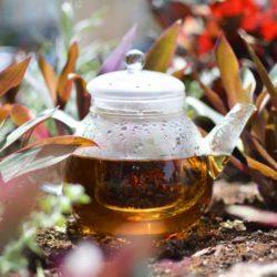GROSCHE glasgow teapot making green tea in garden glass infuser