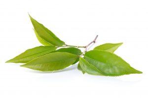 Green Tea Leaf - GROSCHE