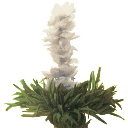 GROSCHE-Jasmine-Glory-Blooming-green-tea-800