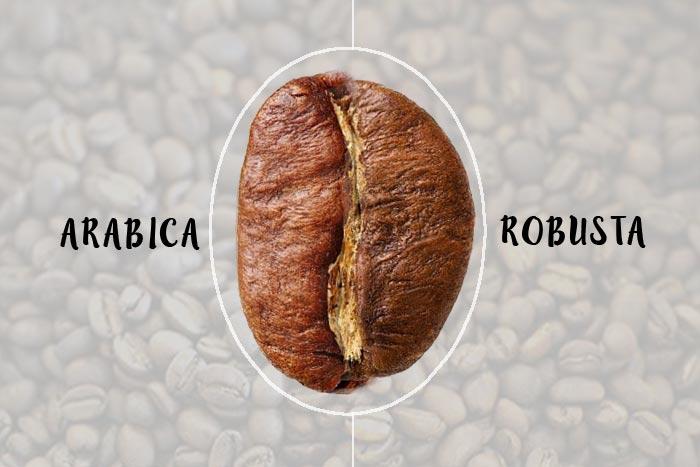 robusta vs arabica blog