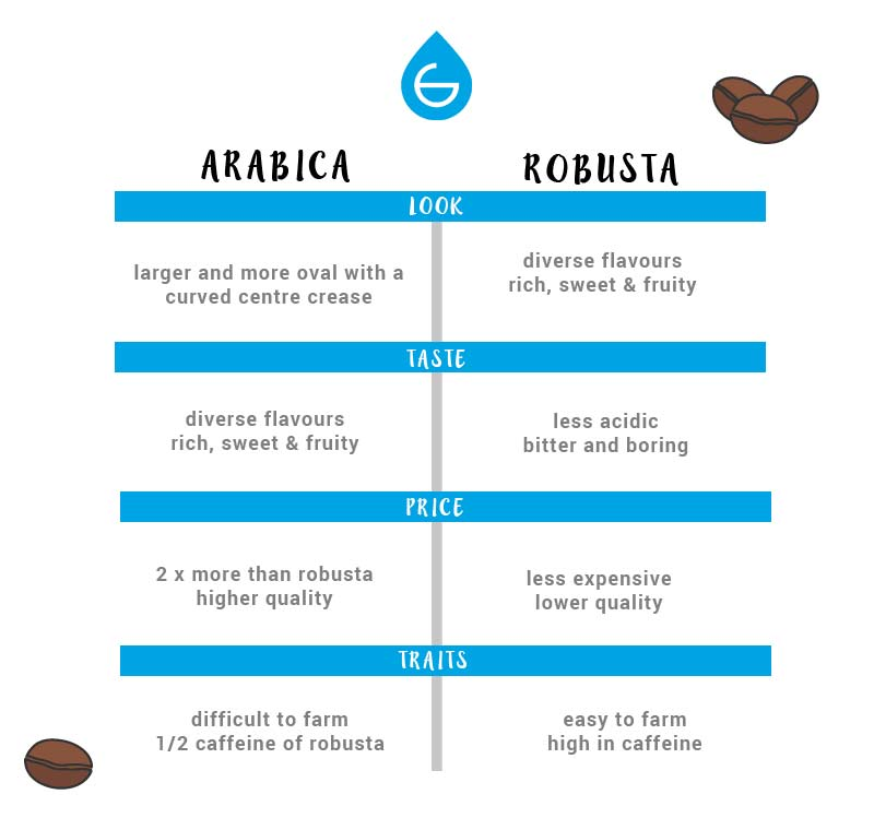 arabica coffee vs robusta coffee chart grosche